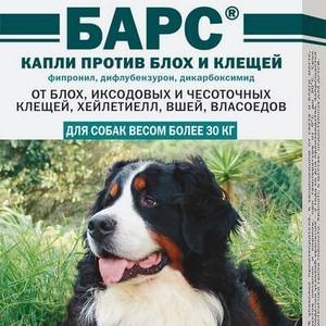 Барс для собак