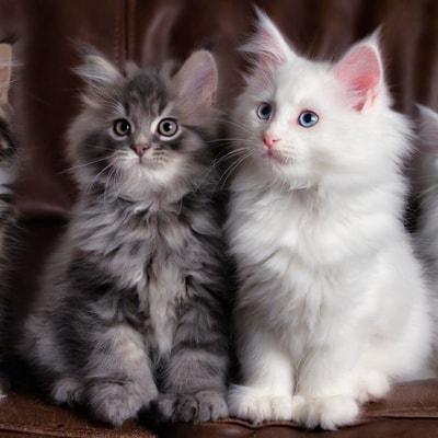 Развитие котят по неделям