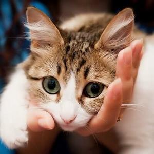 Блефарит у кошек
