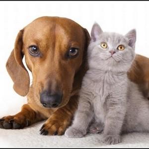 cat dog m.600x600.300x300 - Кусаются ли тараканы, Укус таракана на человеке, фото, как выглядит