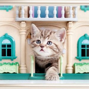 Котенок дома первый день