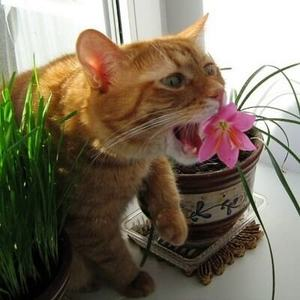 Растения для кошек