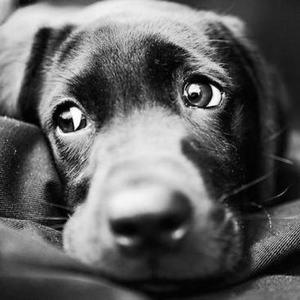 Глисты у собак