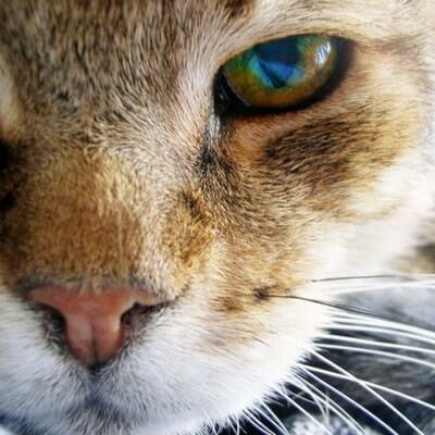 У кота гноятся глаза