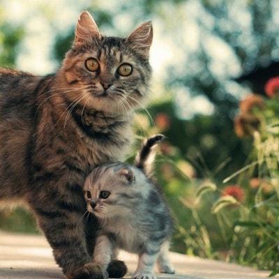 Когда котята начинают ходить
