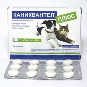 Каниквантел для кошек