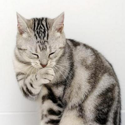 Кошка кашляет