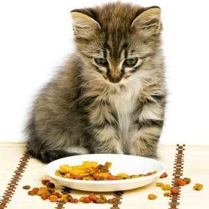 Приучить котенка к сухому корму