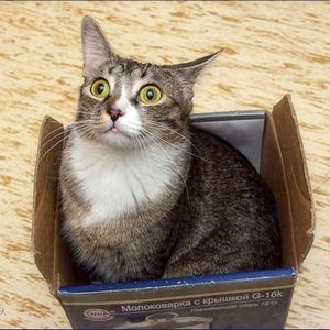 Кошки любят коробки