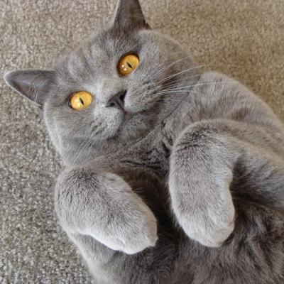 Котозависимость