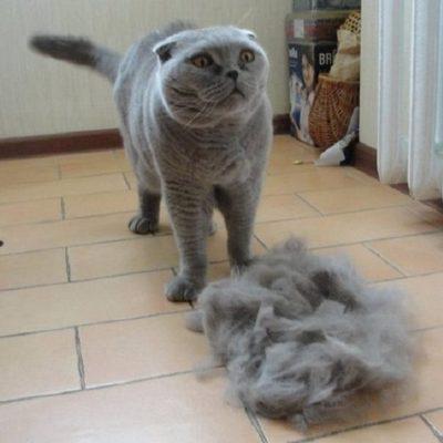 Кошка линяет что делать