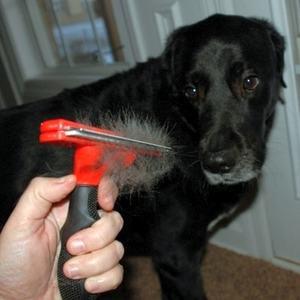 Линька у собак