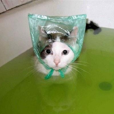 сколько нужно мыть котенка