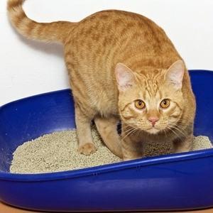 Почему кошка ест наполнитель