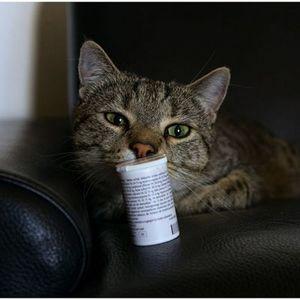 Лечение глистов у кошек