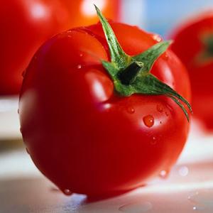 Раннеспелые сорта томатов