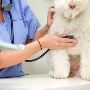 Сердечная недостаточность у собак