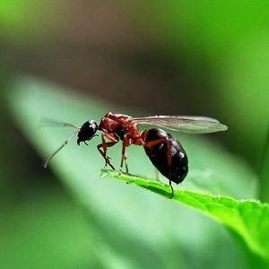 Стадии развития муравьев