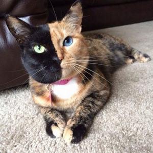 Самые известные породы кошек