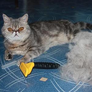 Колтуны у кошки