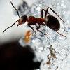 Враги муравьев и подготовка к зимовке