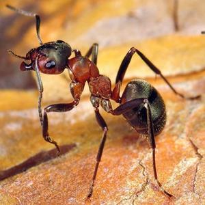 Значение муравьев