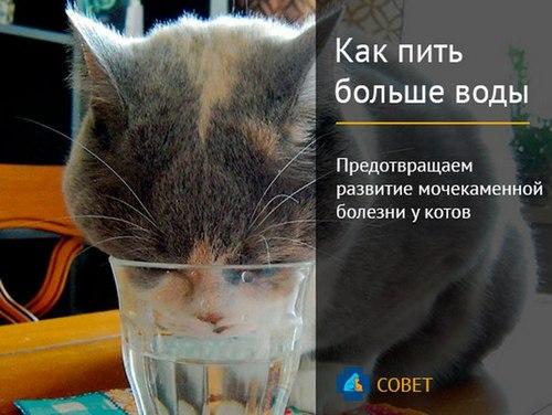 Лечить мочекаменную болезнь у кота в домашних условиях