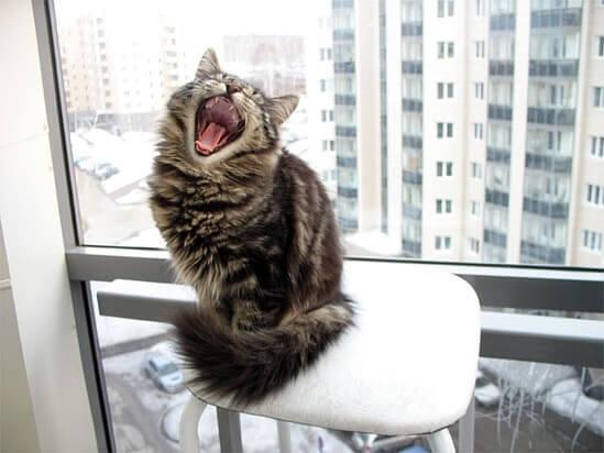 Кошка орет у окна