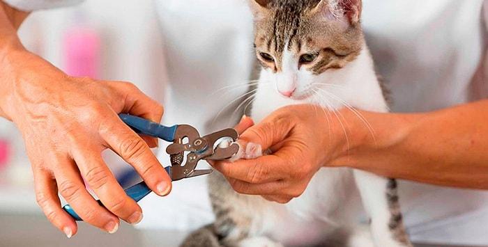 Как правильно подстричь когти кошке и нужно ли это делать