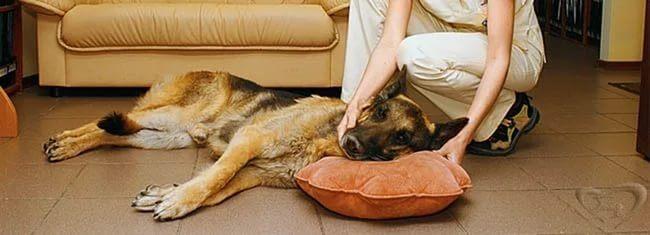 Судороги у собаки и слюнотечение причины