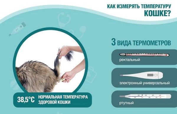 Как измеряют температуру кошке в домашних условиях 504