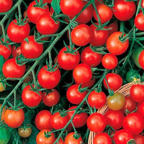 Плода томата Красная гроздь