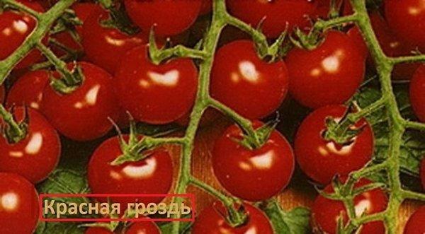 Много томата сорта Красный гроздь