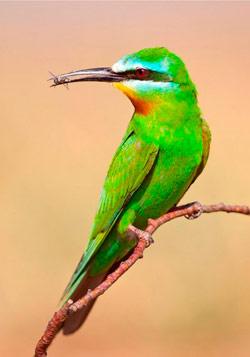 птица ест насекомое